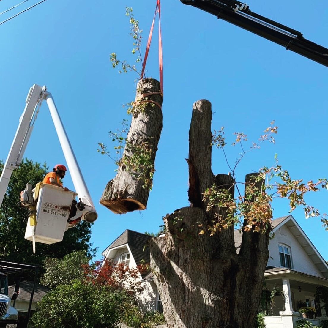Safe Tree Cert Arborist with Crane Truck