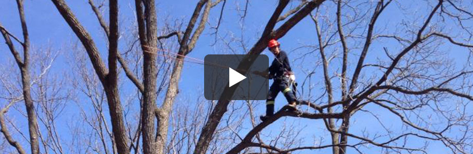 About Safe Tree | Safe Tree Professional Tree Care