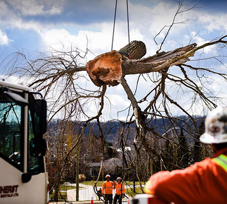 Business & Government Tree Care | Safe Tree Professional Tree Care