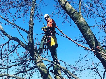 Bracing & Cabling | Safe Tree Professional Tree Care