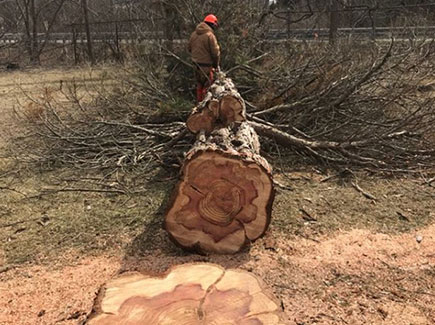 Tree Stump & Removal | Safe Tree Professional Tree Care